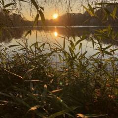 Greg Foat & James Thorpe - Photosynthesis